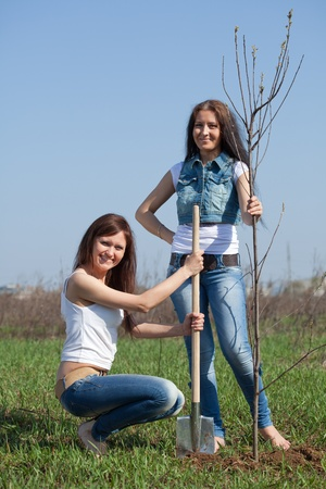 tree planting: Two female gardeners planting tree outdoor in spring