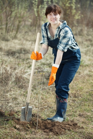 Famale farmer  planting  sprouts shrubbery in ground photo