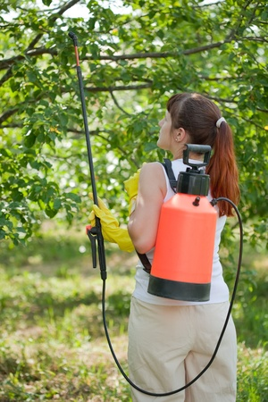 Woman spraying tree plant in orchard photo