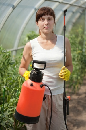 Female gardener   with knapsack garden spray in hothouse photo