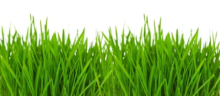 Grass border over white with copyspace photo