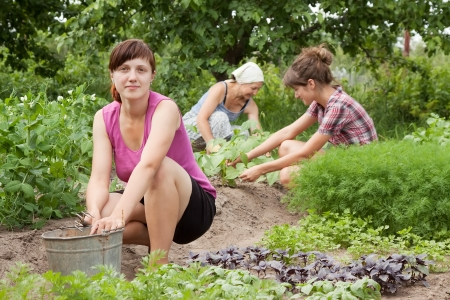 Three women working in her vegetable garden photo