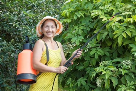 insecticidal: Mature woman spraying tree plant in orchard