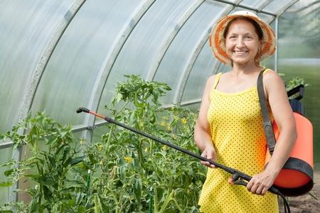 Female gardener spraying tomato plant  with garden spray Stock Photo - 11636344