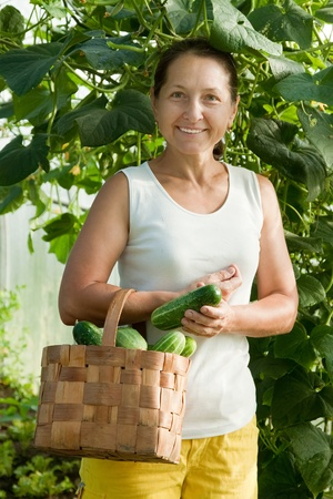 Smiling woman with harvested cucumbers in the hothouse photo