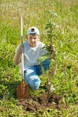 planting season: Teen boy with spade   setting tree outdoor Stock Photo