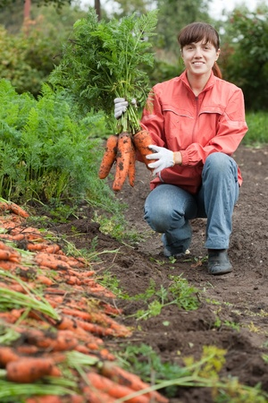 unwashed: young woman with carrot harvest in field Stock Photo
