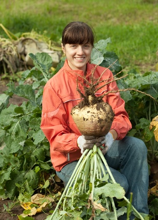 young woman  harvesting rutabaga in field photo