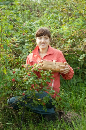 Woman picking briar in plant photo