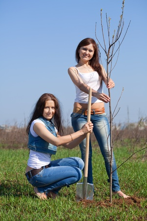 Two female gardeners planting tree outdoor in spring photo