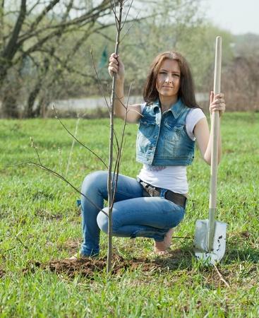Female gardener planting tree outdoor in spring photo