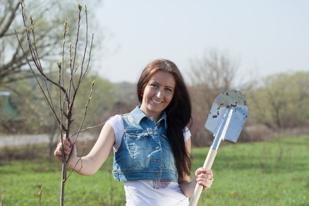 replanting: Female gardener planting tree outdoor in spring Stock Photo