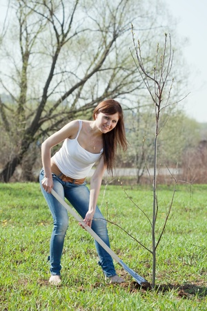 Female gardener planting tree outdoor in spring photo