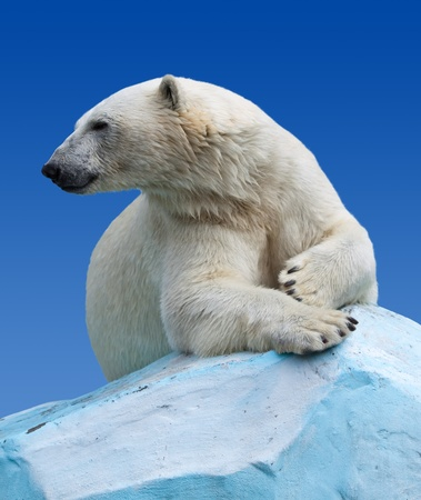 polar bear on the ice: polar bear in wildness area against sky Stock Photo