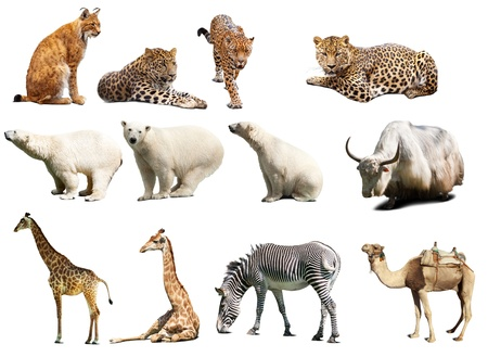 Set of  animals. Isolated over white background Stock Photo - 12289190