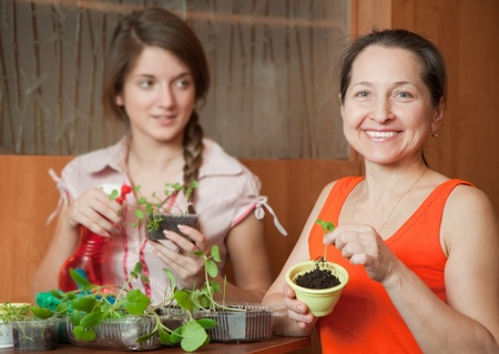 Two women with various sprouts at home photo