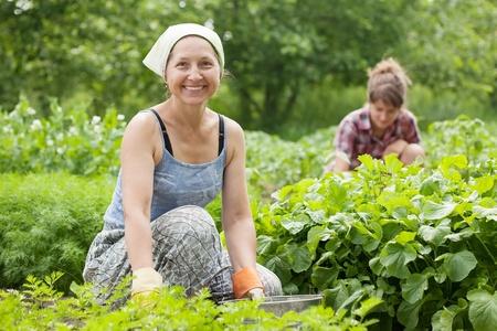 hoeing: Two women working in her vegetable garden