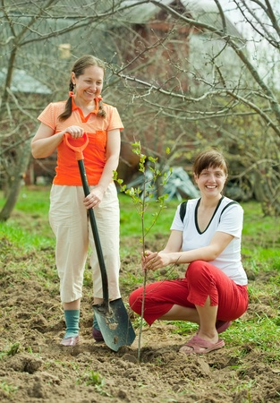 Happy women planting fruit tree outdoor photo