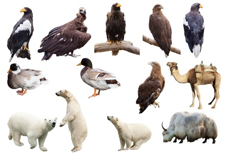 Set of  animals. Isolated over white background photo