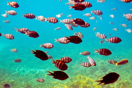 Photo of tropical fishes at coral reef area photo