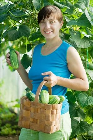 Sourire, femme la cueillette de concombre dans la serre Banque d'images - 12434681