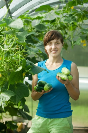cuke: Smiling woman picking cucumber in the hothouse