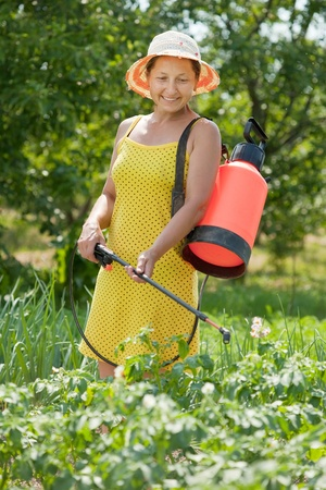 Mature woman spraying potato plant in field photo