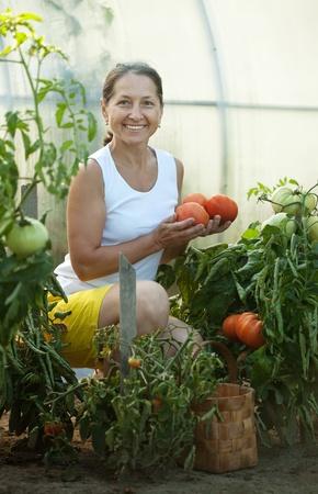 Mature woman picking organic tomatoes in greenhouse photo