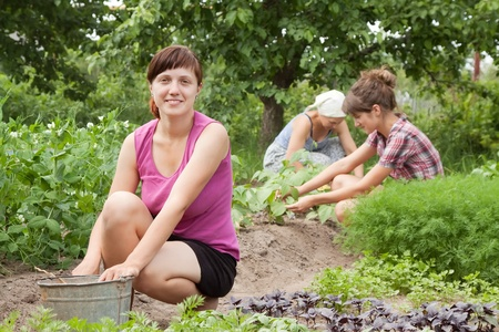 Three women working in her vegetable garden photo