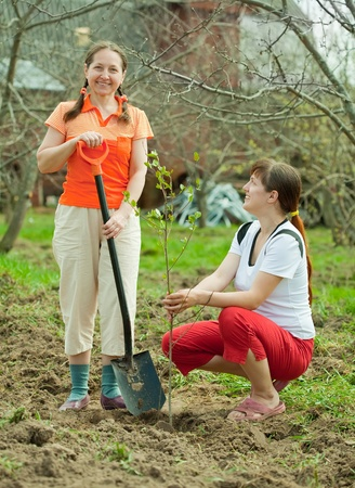 replanting: Happy women planting fruit tree at orchard  in spring