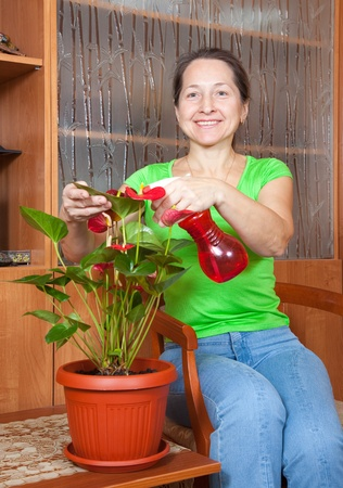 Mature woman watering  anthurium flowers in   flowering pot at her home photo