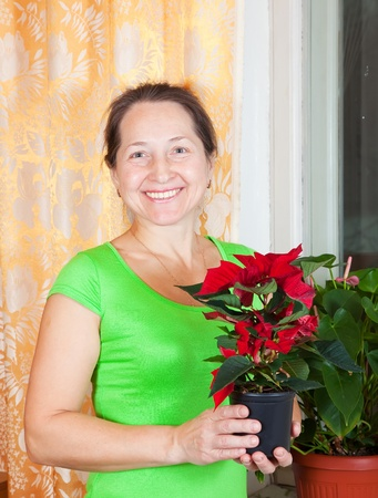 Mature woman with Christmas Star flowers in   flowering pot at her home photo