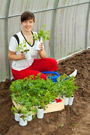 woman with tomato seedlings in pots  at hothouse photo