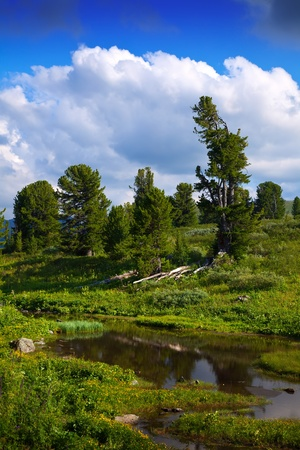 arroyo: Mountains brook in sunny day. Altai, Siberia  Stock Photo