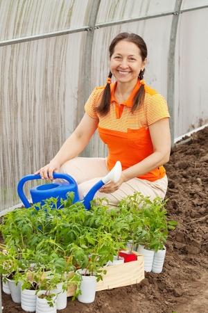 Female gardener planting tomato spouts in hothouse photo