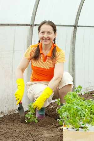 woman planting tomato spouts in greenhouse Stock Photo - 12938118