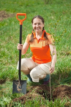Happy  mature woman planting tree at garden in spring photo