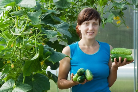 Smiling woman picking cucumber in the greenhouse photo
