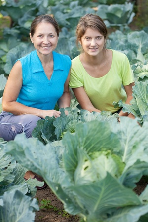 Two women  in plant of cabbage photo