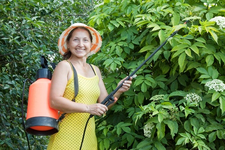 Mature woman spraying tree plant in orchard photo