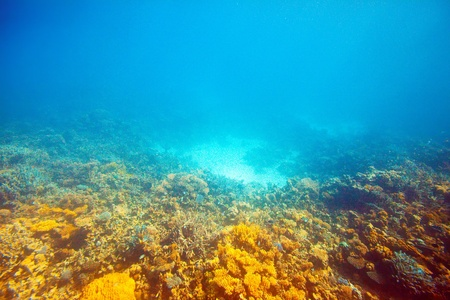 coral reef area in Red sea photo