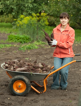 young woman with beetroot harvest in field photo