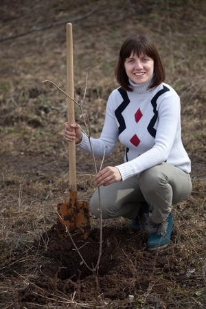 young woman making orchard with spade and sprouts  in spring photo