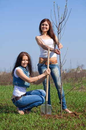 replanting: Two middle age  women planting tree outdoor