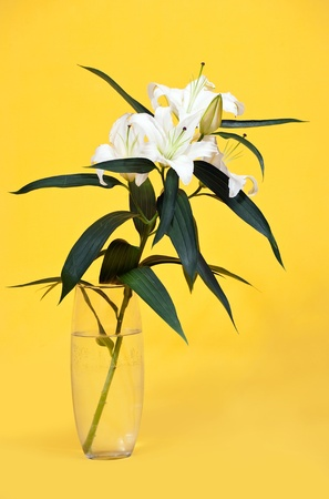bouquet of white lily in vase over yellow  background photo