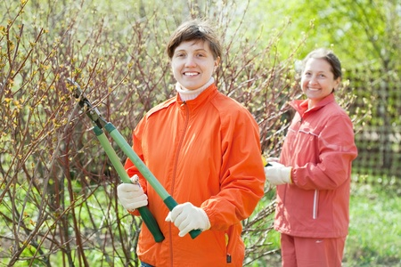 Two women pruned branches in the garden in spring photo