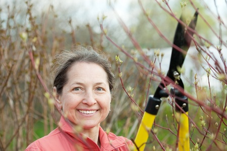 Mature woman pruned branches in the garden in spring photo