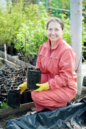 Female gardener chooses bush sprouts at market Stock Photo - 13586825