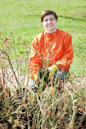 Female gardener chooses bush sprouts at market photo