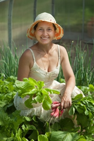 forcing bed: Smiling woman picking radish in the hothouse Stock Photo